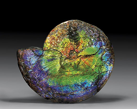 EXCEPTIONAL GEMSTONE AMMONITE