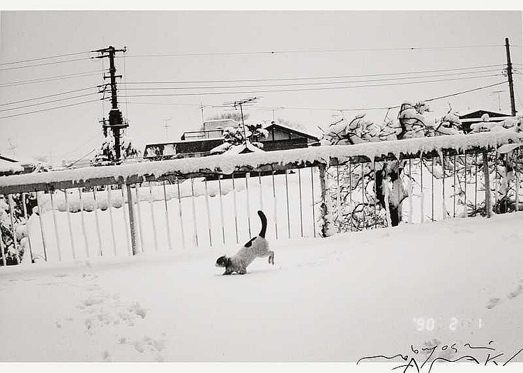 ARTIST: Nobuyoshi Araki(1940-) TITLE: Chiro in the
