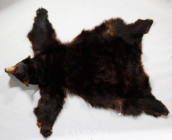 Bear Skin Rug