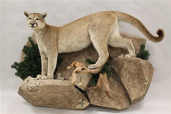 Mountain Lion full body mount - Utah