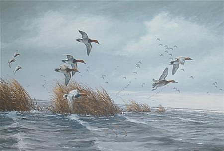 David A. Maass American, b. 1929 Canvasbacks on a Gray Day