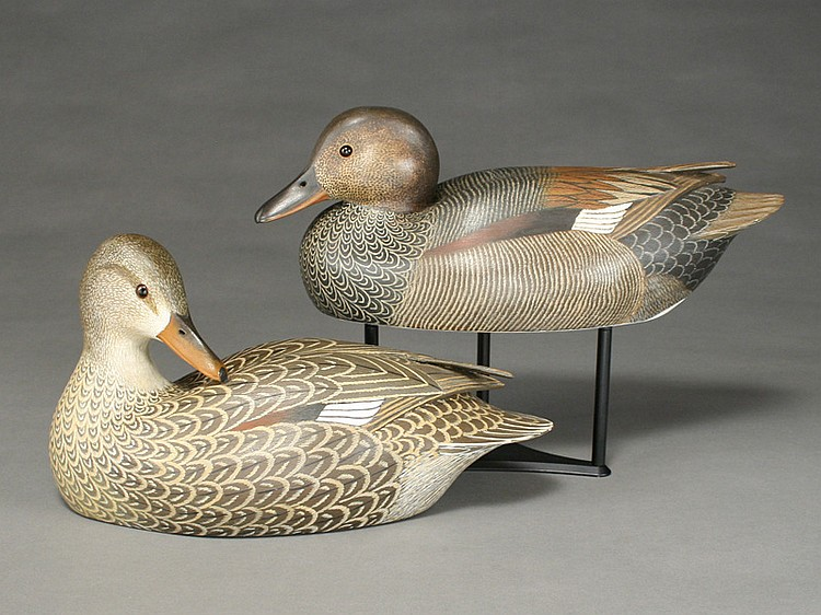 Rare gadwall hen and drake, John McLoughlin, Bordentown, New Jersey.